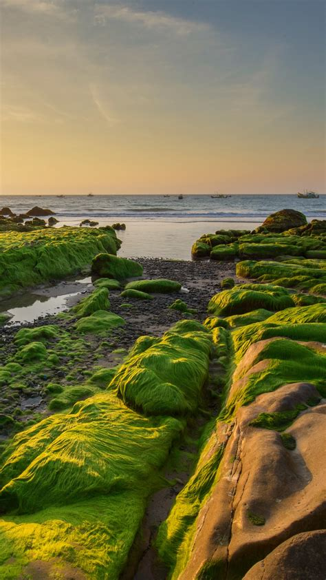 Rocks and moss in the morning at Co Thach beach, Tuy Phong