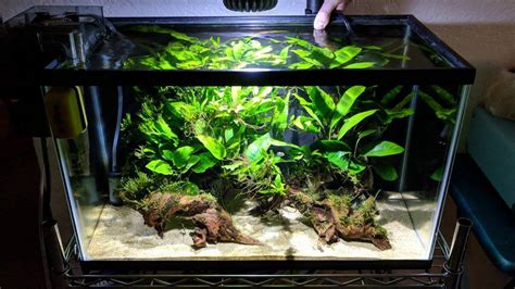 Finished my pea puffer tank, any suggestions? - The