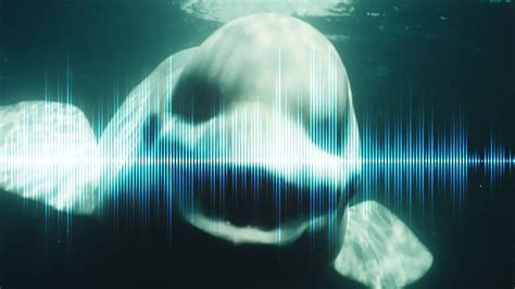 5 Creepiest Sounds in the Ocean Ever Recorded - YouTube